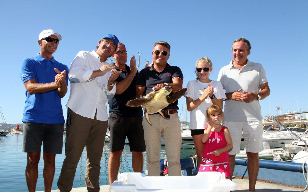 El Club Náutico de Jávea y el Oceanogàfic devuelven la tortuga Chiquiti al mar Mediterráneo